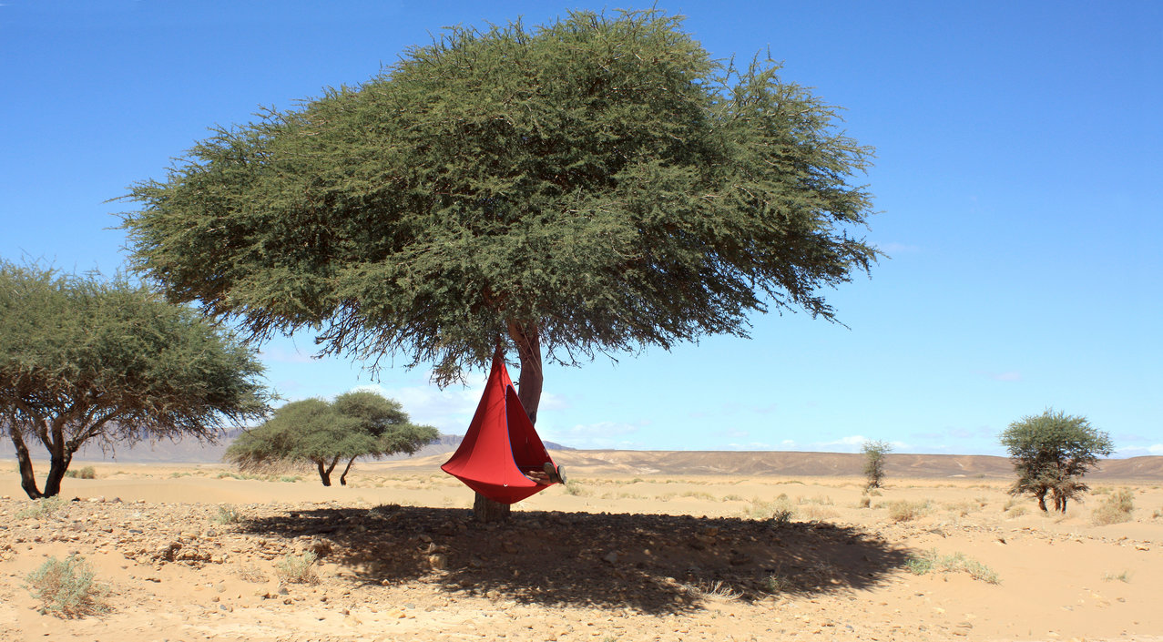 Single Cacoon kraaiennest