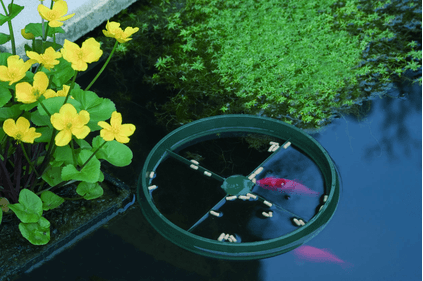 Ubbink fish feed ring