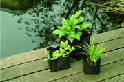 Waterplantaccessoires