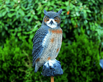 Apollo Large Owl