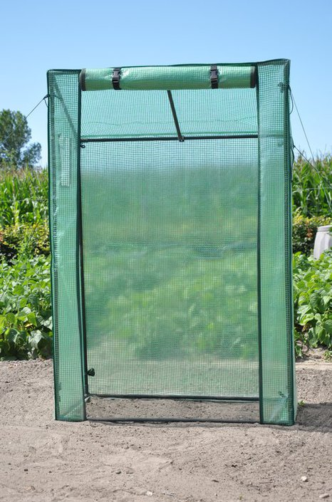 Royal Well Roma Tomato foil greenhouse