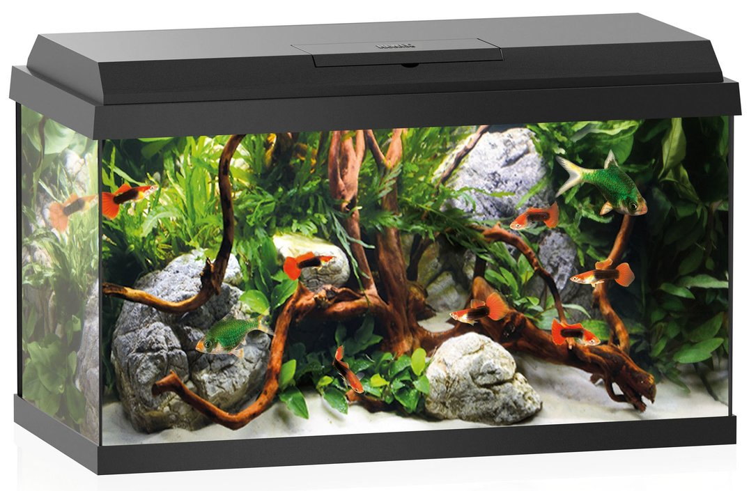 juwel primo 60 led aquarium