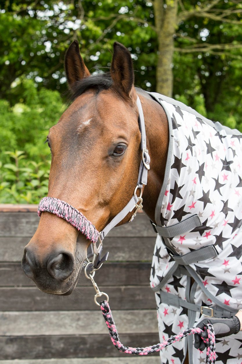 Harry's Horse fly rug with a loose neck