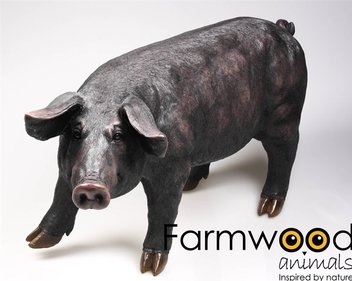 Farm Animals Black Pig garden image