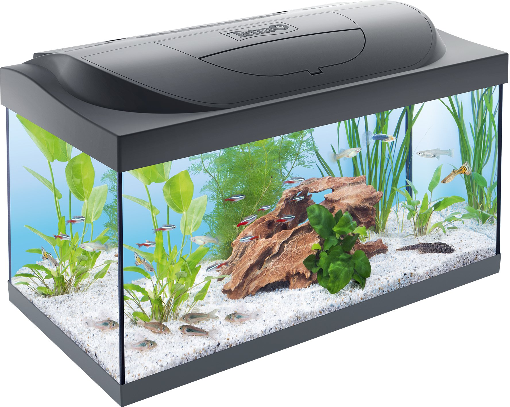 tetra starter line led aquarium kopen frank. Black Bedroom Furniture Sets. Home Design Ideas